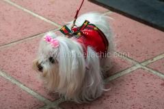 rosas-cafe-marbella032_FT_PIL0654