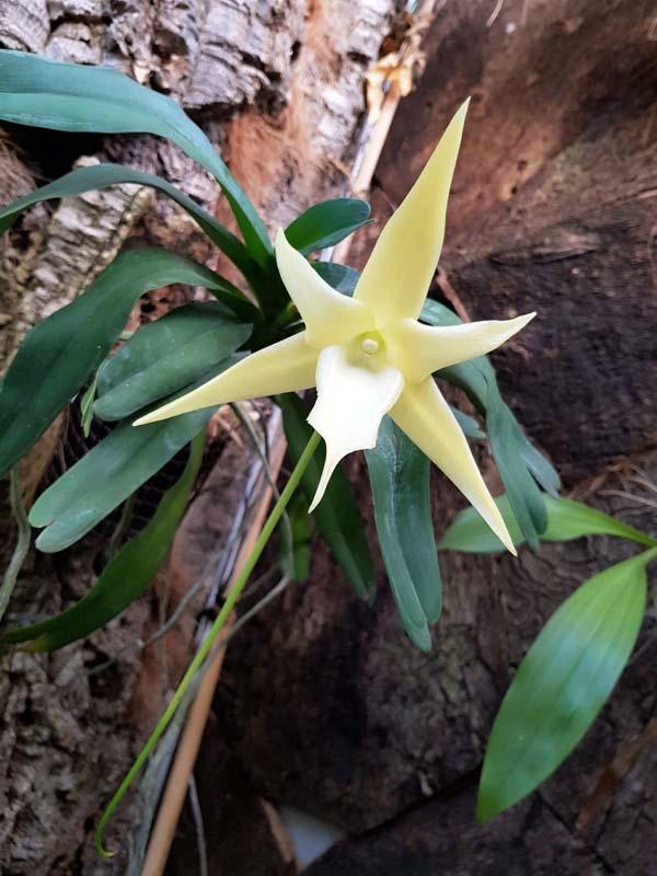 orquidario estepona