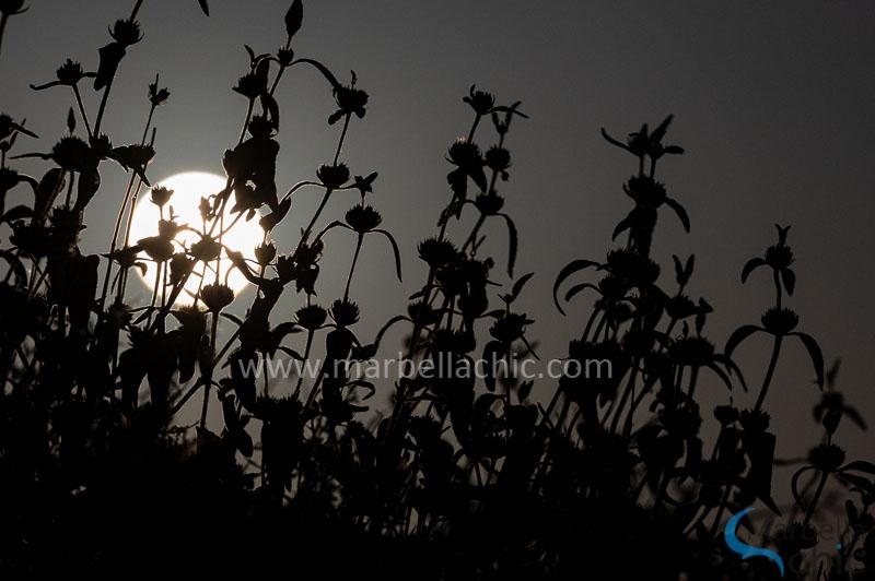 superluna de las flores marbella