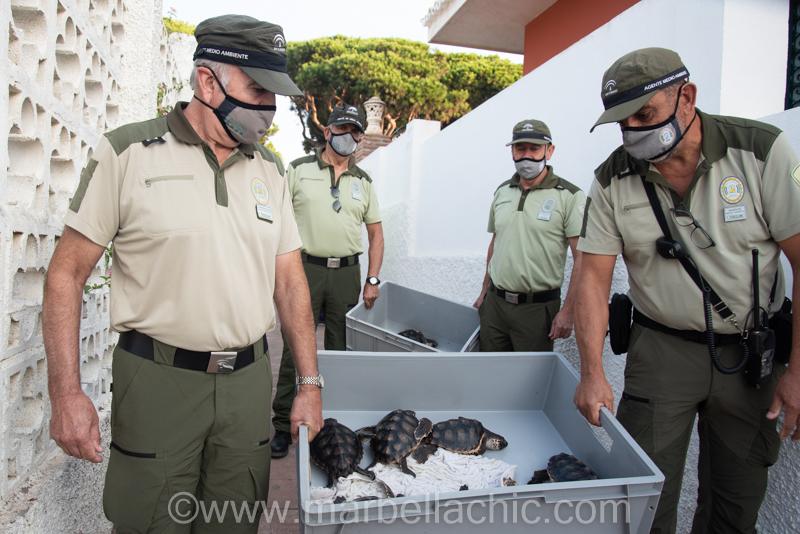 suelta de tortugas produnas marbella