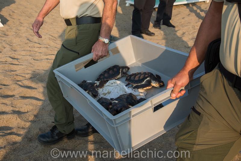Suelta de tortugas boba en Marbella